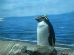 寝てるペンギン.JPG