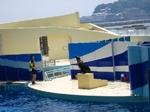 新江ノ島水族館2.JPG