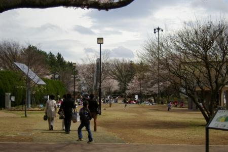 yumemigasakiIMGP0001 (11).jpg